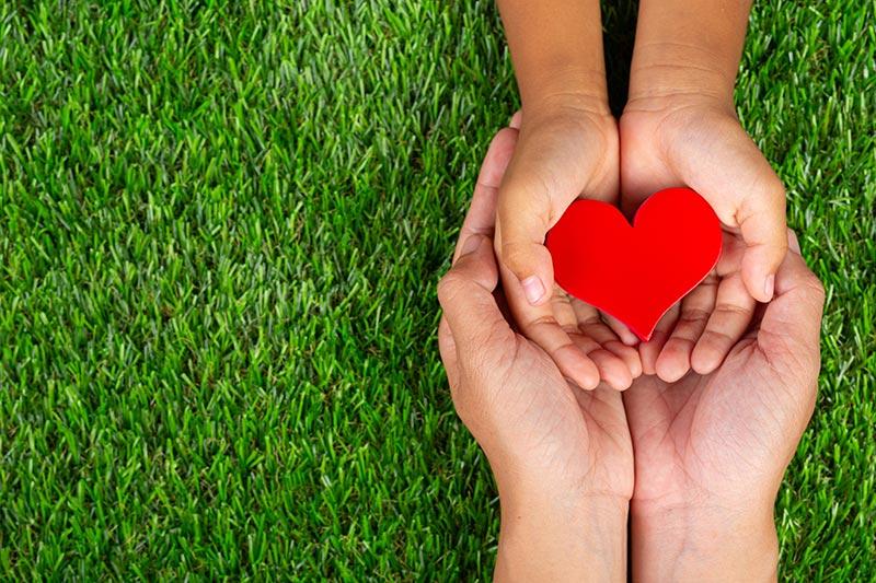 red-heart-shape-family-member-s-hands-holding